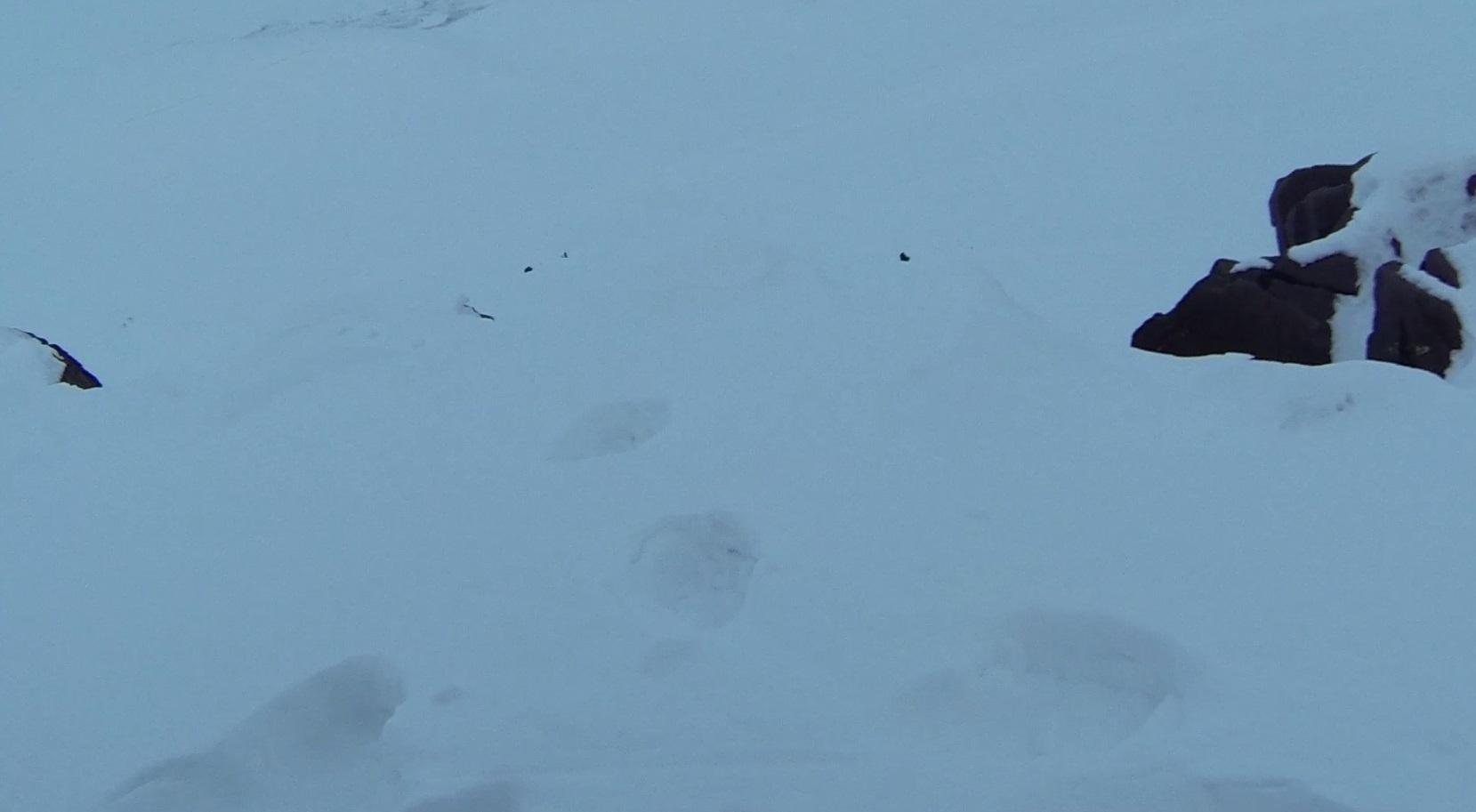 Expedition Spitzbergen Schneemobil Eisbären