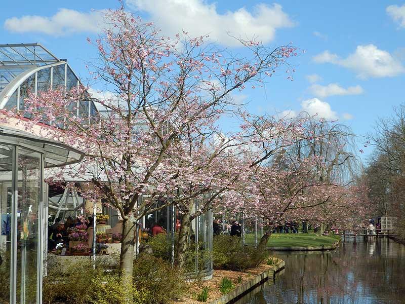Frühlingsblumen Ausstellung Keukenhof Ausflugstipp Amsterdam Niederlande - Städtetrip Amsterdam Sehenswertes, Aktivitäten und Tipps www.gindeslebens.com