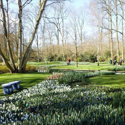 Keukenhof Frühlingsblumen Ausstellung Ausflugstipp Amsterdam Niederlande - Städtetrip Amsterdam Sehenswertes, Aktivitäten und Tipps www.gindeslebens.com