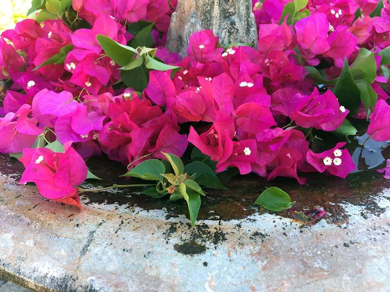 Gartenanlage Paradisus Rio de Oro ©Thomas Mussbacher und Ines Erlacher
