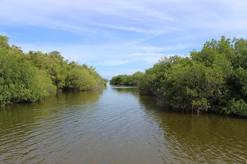Kuba Sehenswürdigkeiten - Naturschutzgebiet Las Guanas Trail