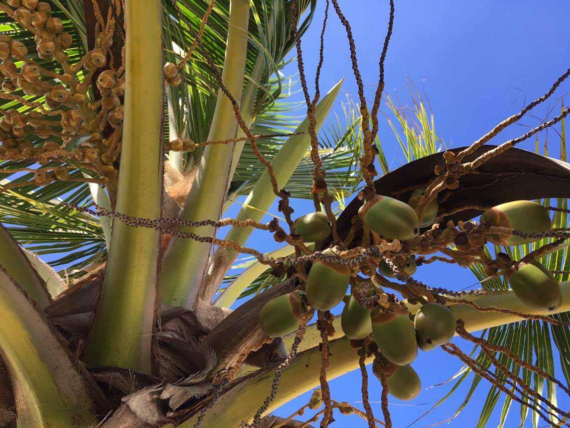 Kuba Palme ©Thomas Mussbacher und Ines Erlacher