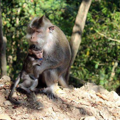 Ausflug Monkey Forrest Lombok Affen Lombok Indonesien Asien Hoteltipp, Sehenswertes und Reisebericht Lombok unbekannte Perle Indonesiens www.gindeslebens.com