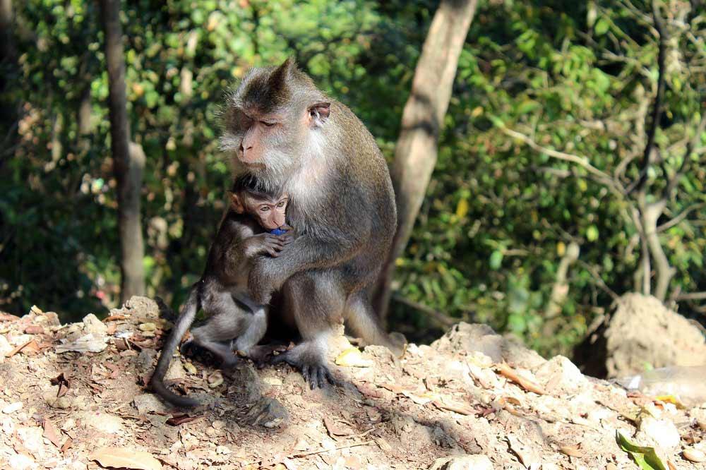 Monkey Forrest Lombok © Thomas Mussbacher und Ines Erlacher