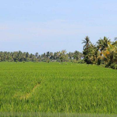 Reisfelder Ausflug Lombok Indonesien Asien Hoteltipp, Sehenswertes und Reisebericht Lombok unbekannte Perle Indonesiens www.gindeslebens.com