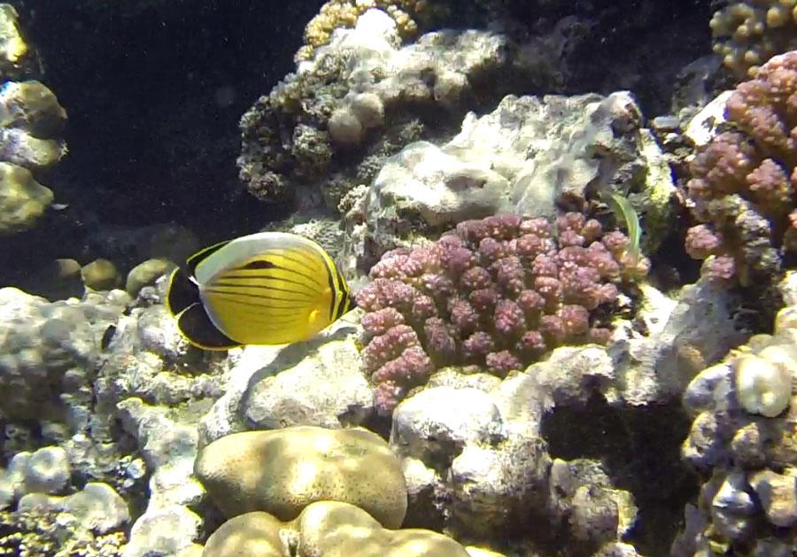 Marsa Alam Ägypten Unterwasser © Thomas Mussbacher und Ines Erlacher