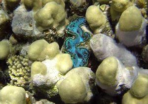 Muschel Koralle Schnorcheln Tauchen Marsa Alam Ägypten Hotel Gorgonia Beach Ägypten Tauchparadies in der Krise www.gindeslebens.com