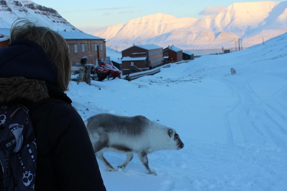 Spitzbergen Urlaub in der Arktis Rentiere Spitzbergen © Thomas Mussbacher und Ines Erlacher
