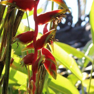 Sheraton Senggigi Beach Blüte in der Gartenanlage Indonesien Asien Hoteltipp, Sehenswertes und Reisebericht Lombok unbekannte Perle Indonesiens www.gindeslebens.com