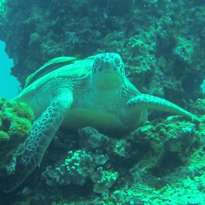 Gili Trawangan Unterwasser © Thomas Mussbacher und Ines Erlacher