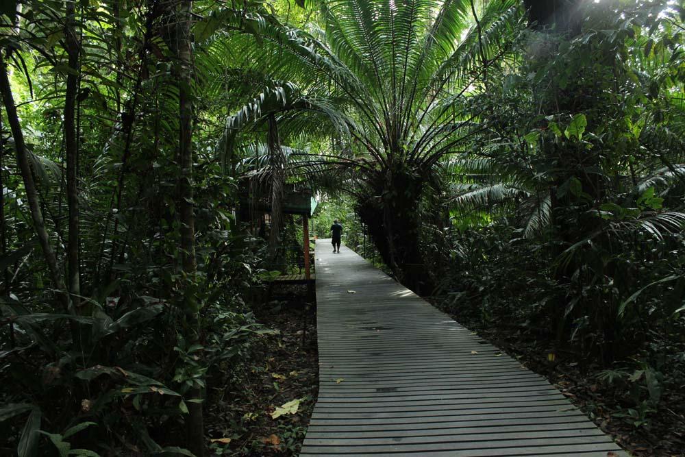 Abenteuer Glamping im Dschungel Costa Ricas Almonds & Corals www.gindeslebens.com