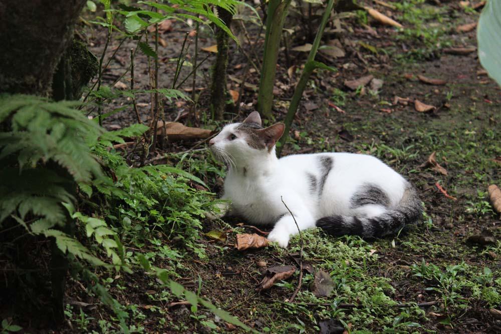 Katze Cariblue Karibikküste Costa Rica www.gindeslebens.com