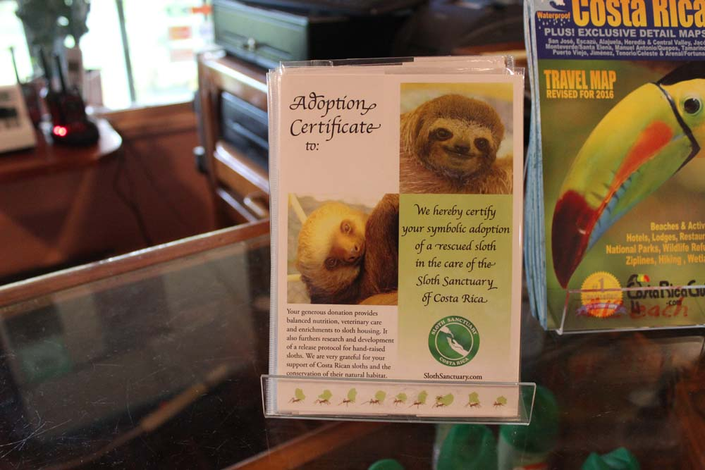 Compadres und Mandelbaum Patenschaft Sloth Sanctuary Costa Rica www.gindeslebens.com