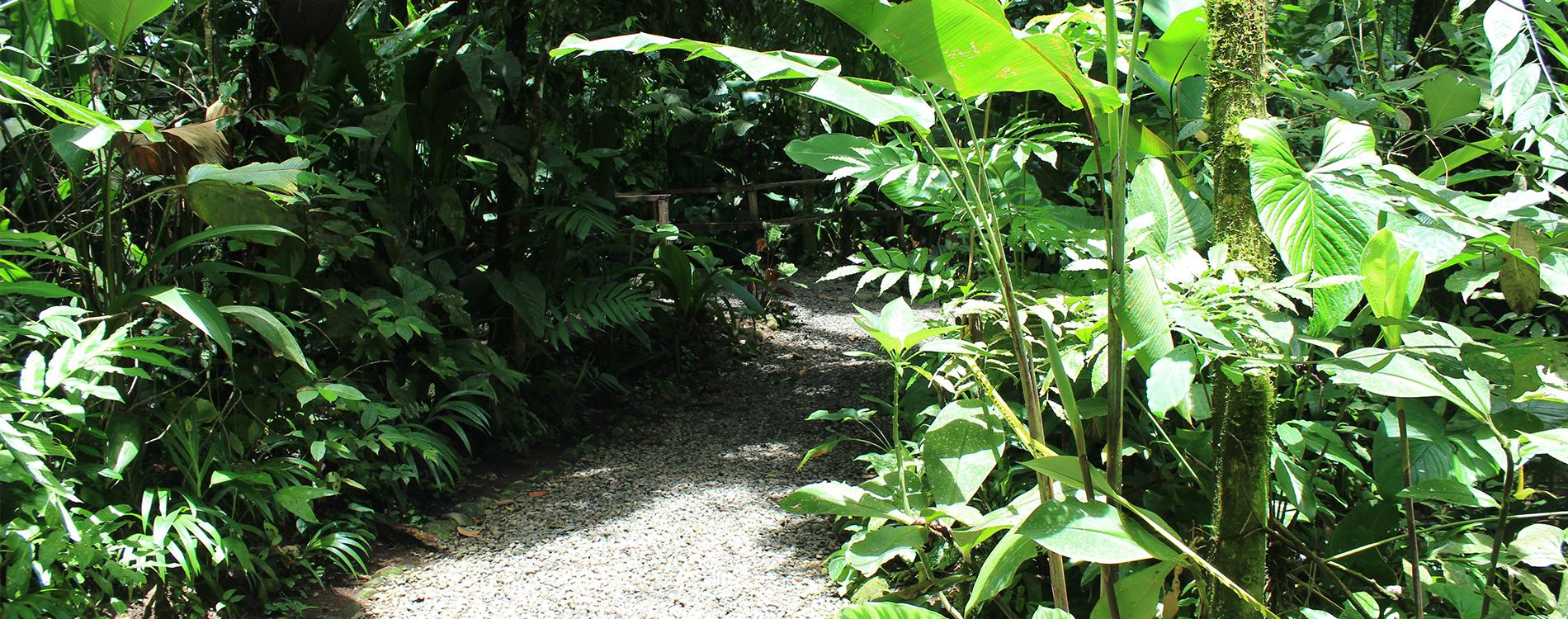 La Fortuna Costa Rica - 3 Ausflugstipps in und um La Fortuna