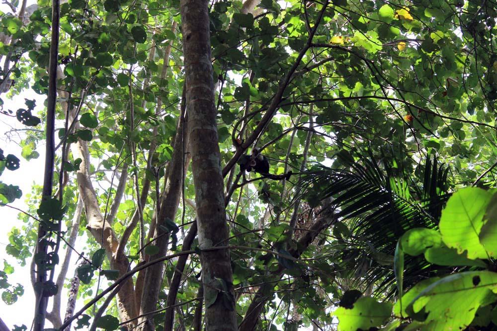 Affen im Nationalpark Cahuita Costa Rica www.gindeslebens.com