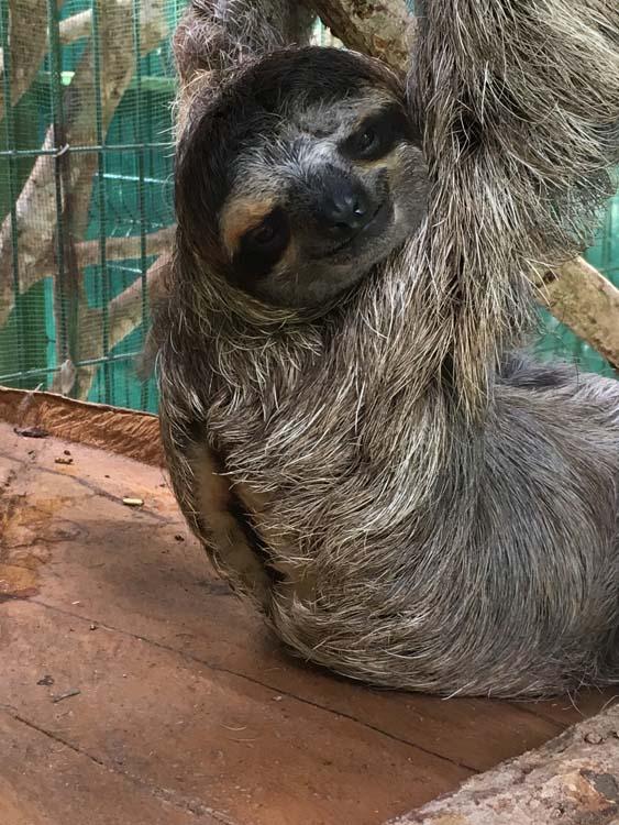 Dreifingerfaultier Sloth Sanctuary Costa Rica www.gindeslebens.com