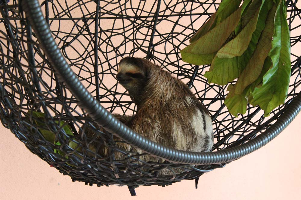 Buttercup Sloth Sanctuary Costa Rica www.gindeslebens.com