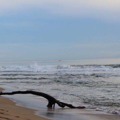 Strand Karibikküste Abenteuer Glamping im Dschungel von Costa Rica Almonds & Corals www.gindeslebens.com