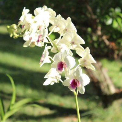 Orchideen Anlage Iberostar Hacienda Dominicus Bayahibe Dominikanische Republik www.gindeslebens.com
