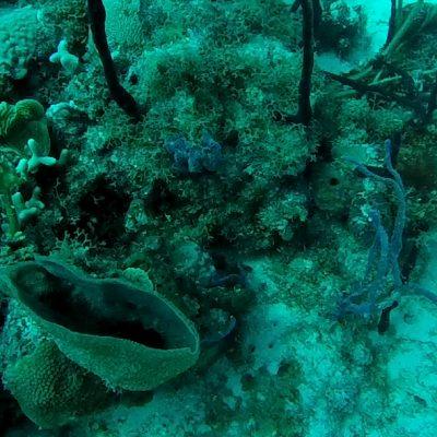Korallen Dom Rep www.gindeslebens.com