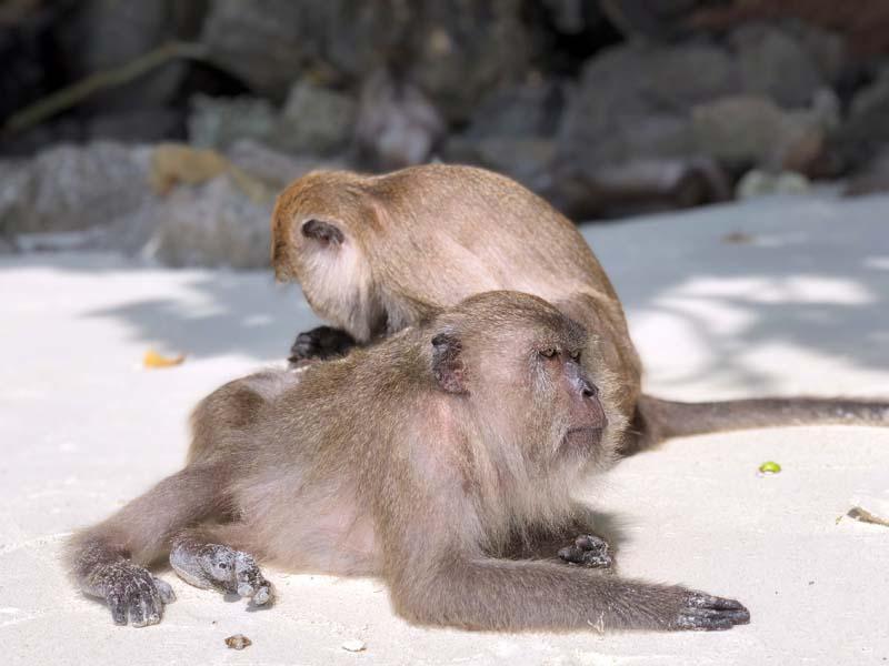 Monkey Beach Koh Phi Phi Don Thailand www.gindeslebens.com