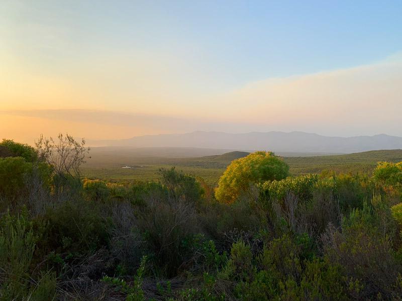 Naturschutzgebiet Grootbos Privat Nature Reserve www.gindeslebens.com