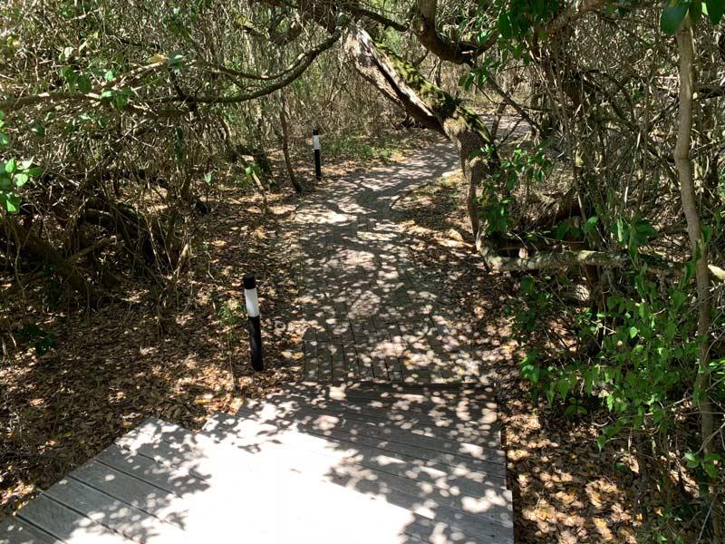 Milkwood Wald Grootbos Privat Nature Reserve www.gindeslebens.com
