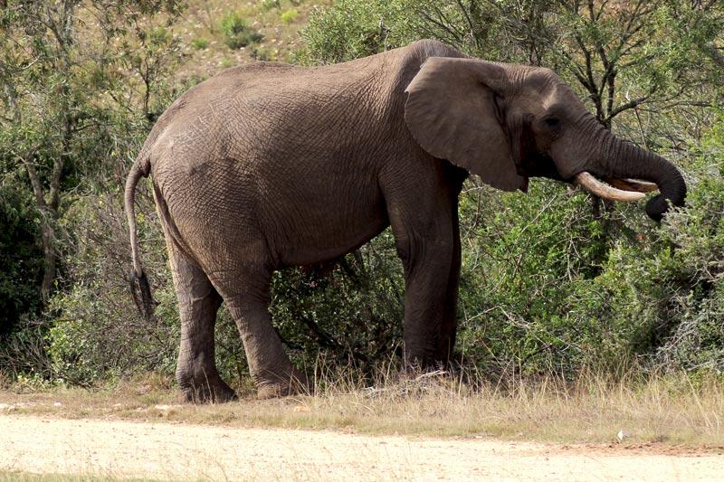 Elefant Big Five Safari Fauna und Flora Südafrika www.gindeslebens.com