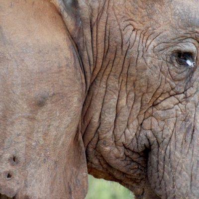 Haut eines Elefanten www.gindeslebens.com