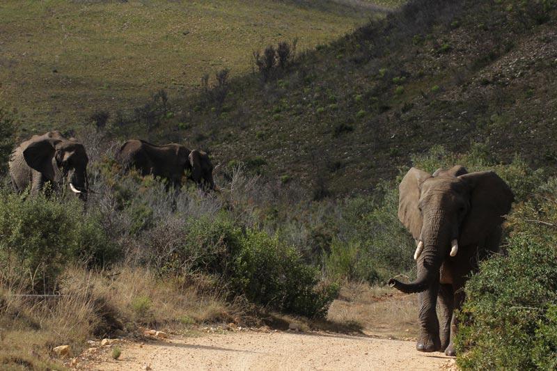 Elefanten Südafrika www.gindeslebens.com