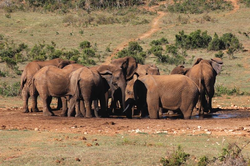 Elefantenherde www.gindeslebens.com