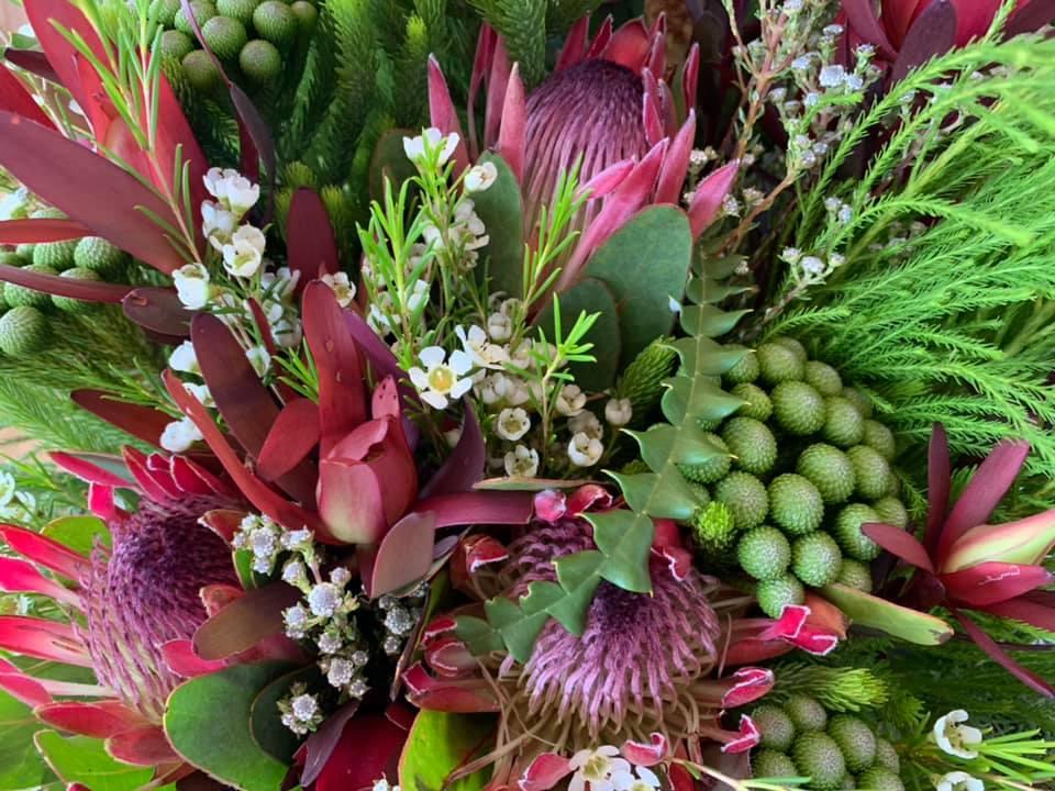 Fynbos und Protea - Fauna und Flora in Südafrika www.gindeslebens.com