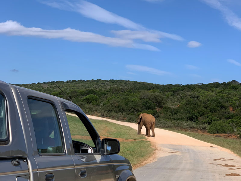Tipp SUV für mehr Sicht im Nationalpark Südafrika Reise - Tipps zum Mietauto www.gindeslebens.com