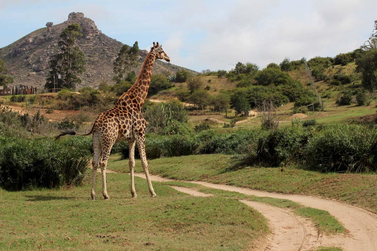 Südafrika Sehenswürdigkeiten – Südafrika Rundreise Highlights und Route