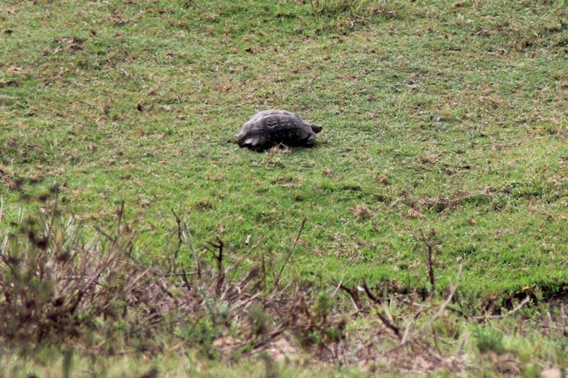 Schildkröte Little Five Fauna und Flora Südafrika Game Drive www.gindeslebens.com