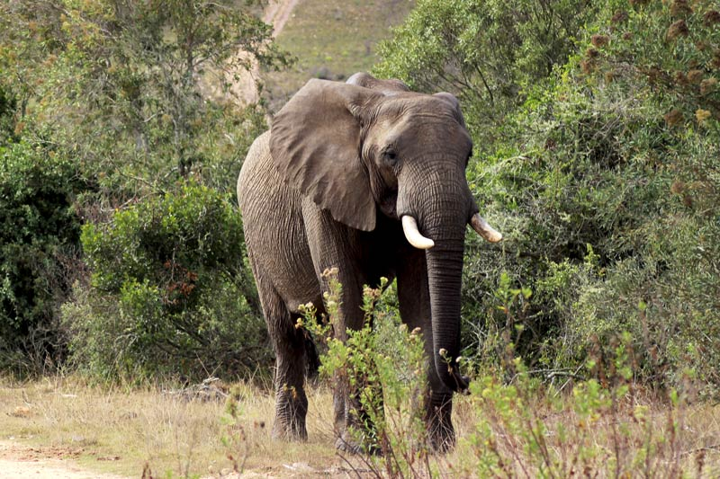 Südafrika Safari Elefant www.gindeslebens.com