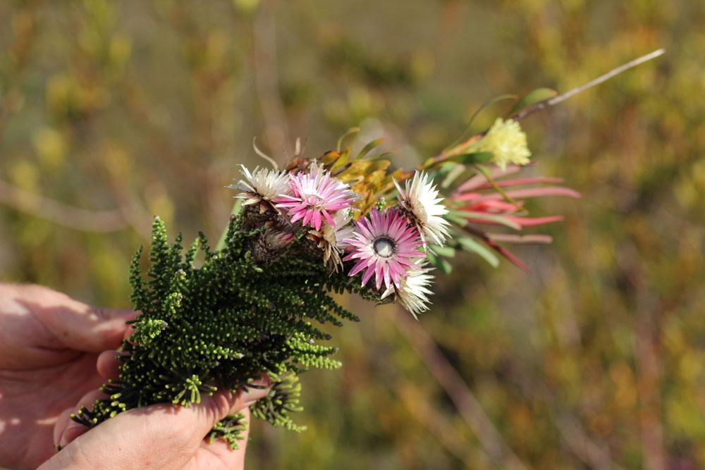 Pflanzenwelt Südafrika www.gindeslebens.com