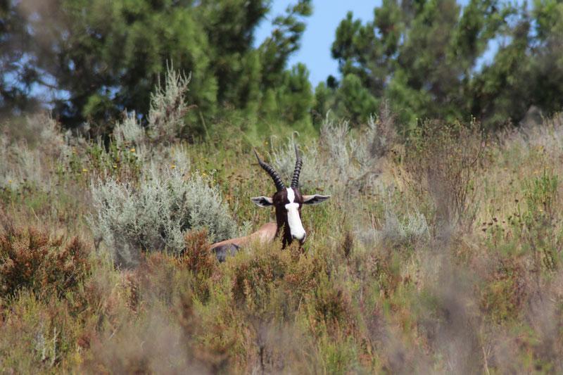Tierwelt in Südafrika