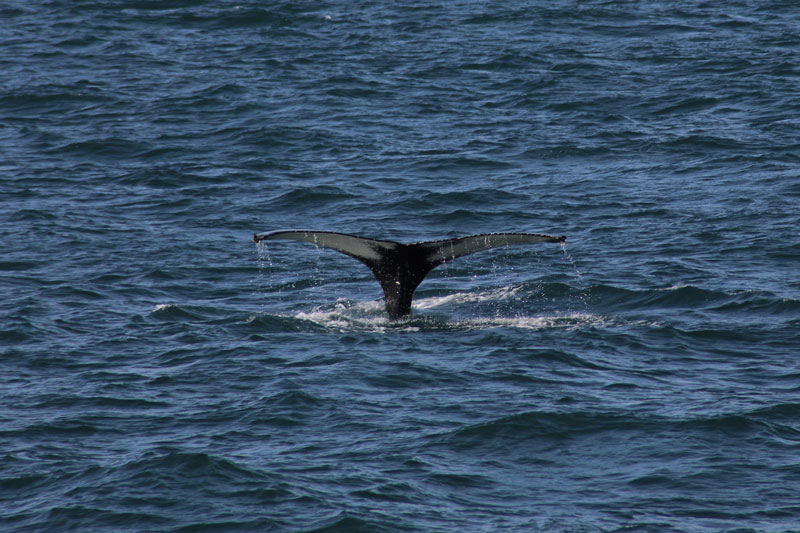 Whale Watching Island www.gindeslebens.com