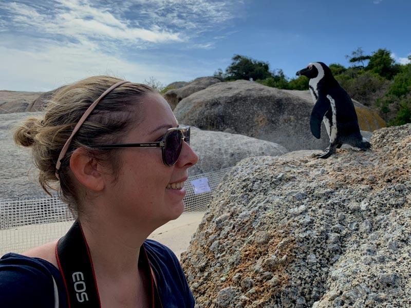 Pinguine in Südafrika ganz nahe sehen