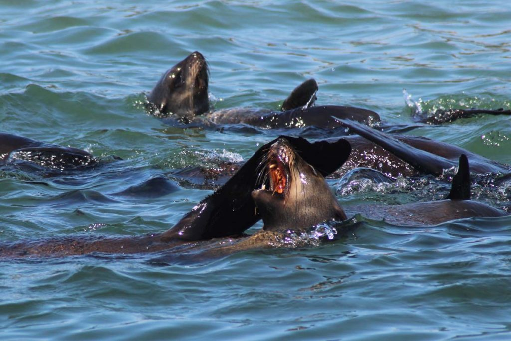 Grootbos Marine Big 5 Safari