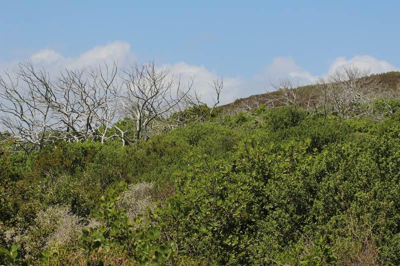 Grootbos Milkwood Wald