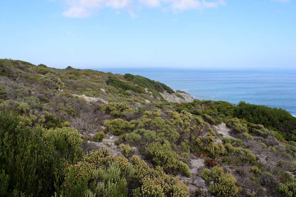 Grootbos Tour Walker Bay