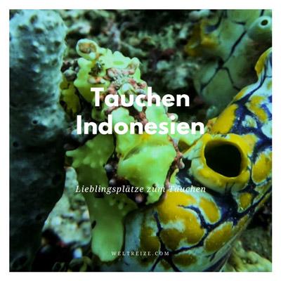 Tauchen Indonesien
