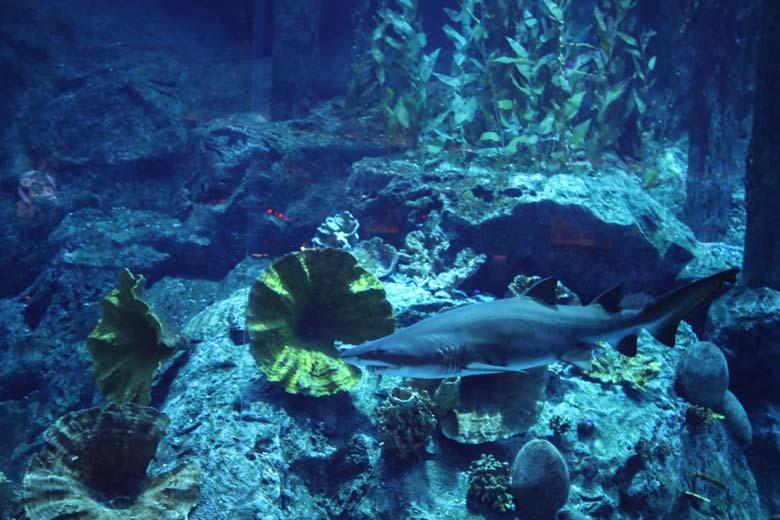 Sehenswürdigkeiten in Dubai Aquarium